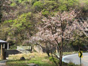 3月29日 土居町野田線