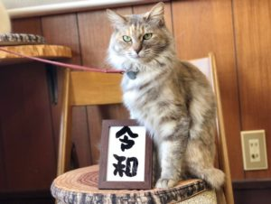 猫官房長官