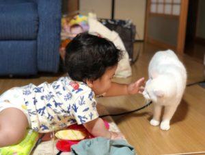 赤ちゃんと猫のいる生活