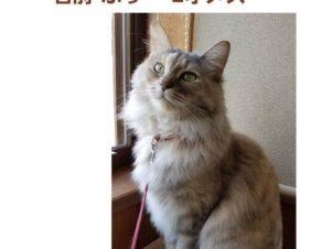 お騒がせ猫ふぅちゃん