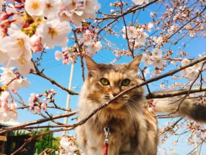 お花見シーズン到来